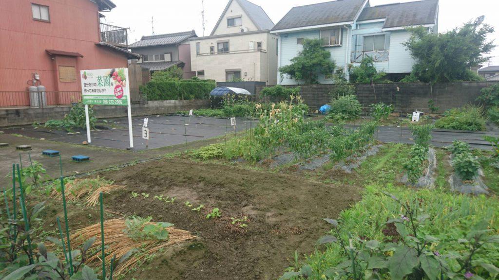 My Sunny Garden 上佐波西