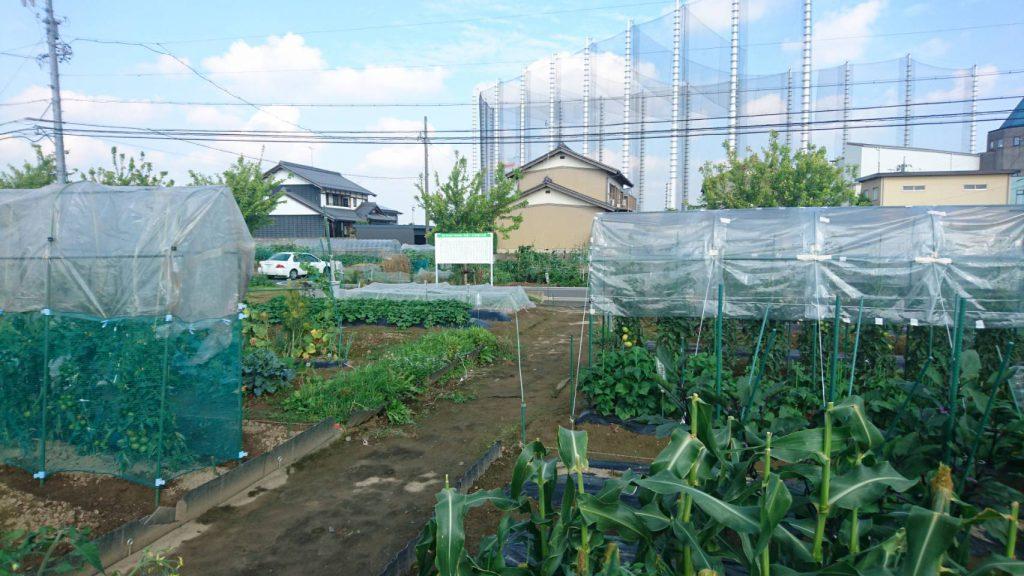 My Sunny Garden 合渡(一日市場)